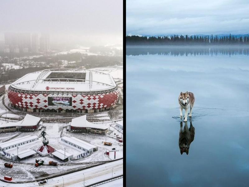 Activistas buscan detener asesinatos de perros en Rusia