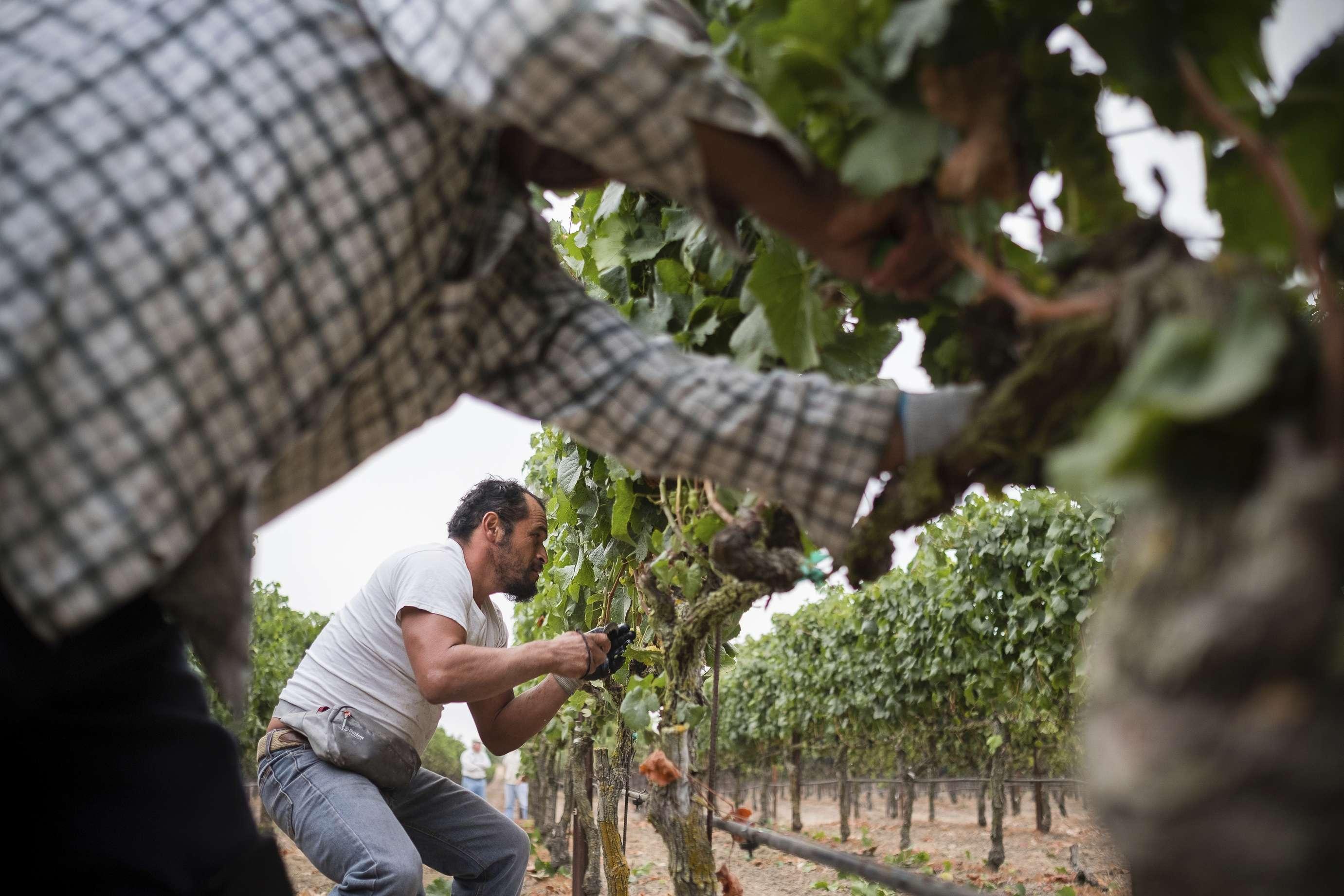 México-estadounidenses en vinícola, tema de filme de PBS