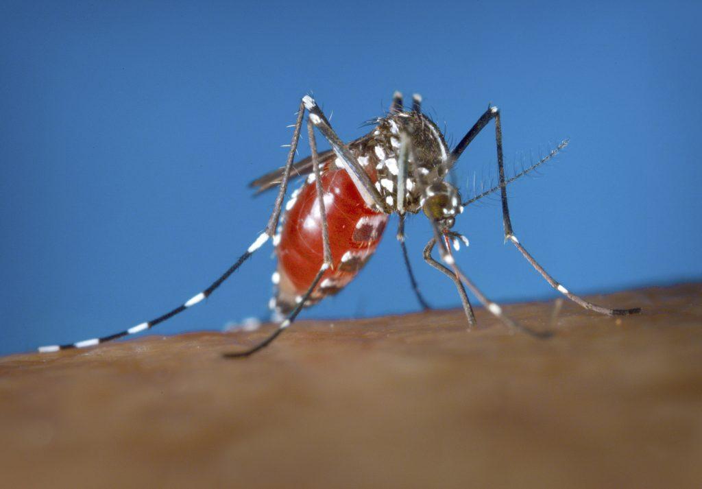 Hallan nueva manera de matar mosquitos portadores de males