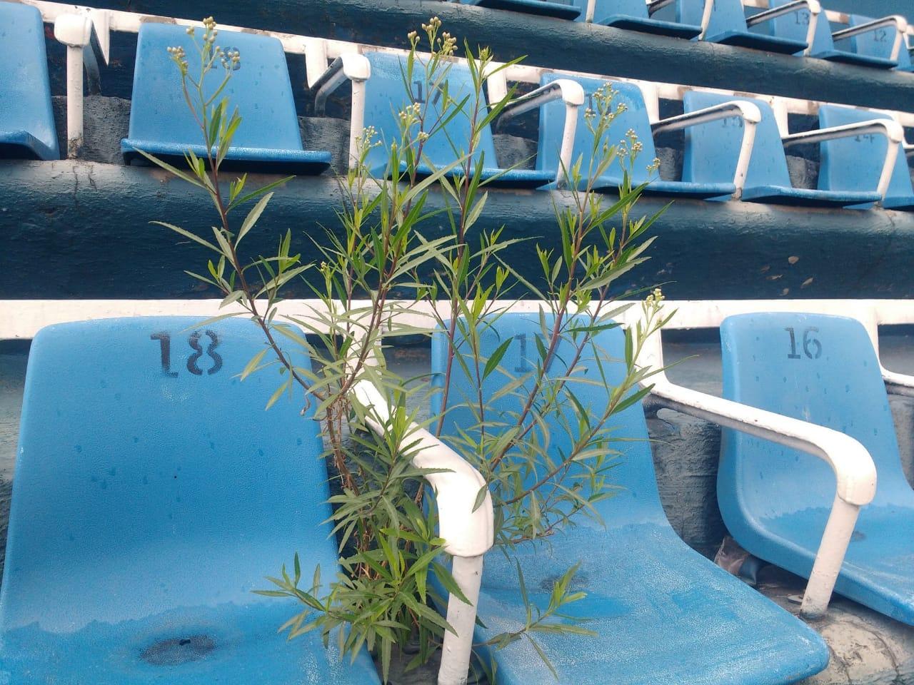 Revelan en redes malas condiciones del Estadio Azul